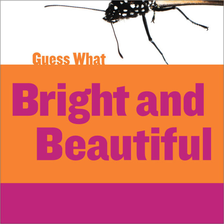 Cover: Bright and Beautiful: Butterfly