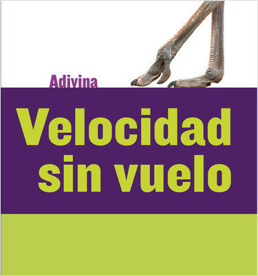 Cover: Velocidad sin vuelo (Fast and Flightless): Avestruz (Ostrich)