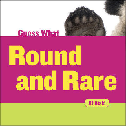 Cover: Round and Rare: Giant Panda