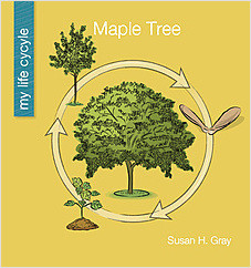 Cover: Maple Tree