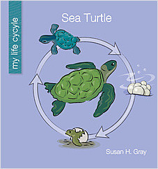 Cover: Sea Turtle