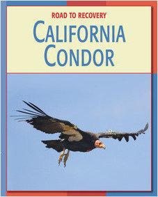 Cover: California Condor
