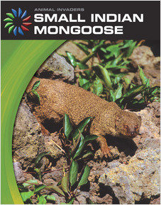Cover: Small Indian Mongoose