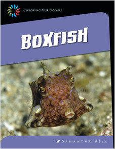 Cover: Boxfish
