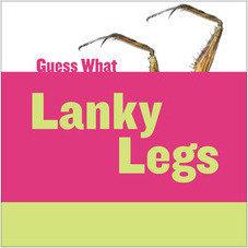 Cover: Lanky Legs: Praying Mantis