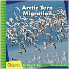Cover: Arctic Tern Migration