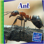 Cover: Ant