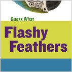 Cover: Flashy Feathers