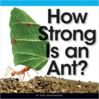 Cover: How Strong Is an Ant?