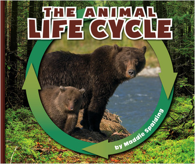 Cover: The Animal Life Cycle