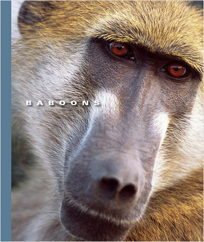 Cover: Baboons