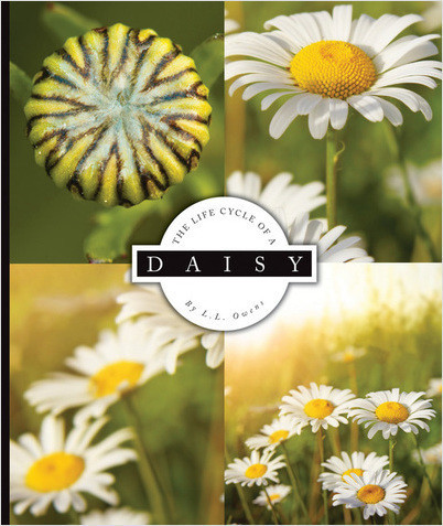 Cover: The Life Cycle of a Daisy