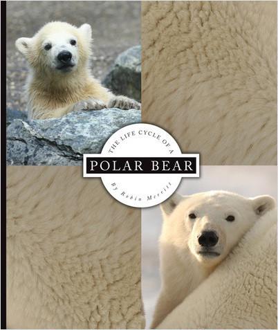 Cover: The Life Cycle of a Polar Bear