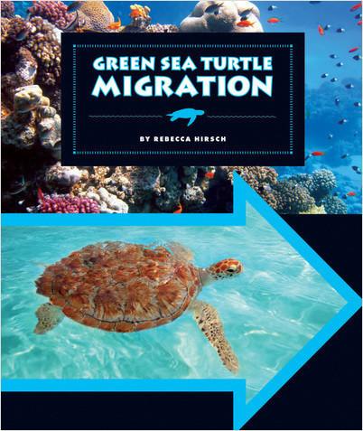 Cover: Green Sea Turtle Migration
