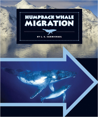 Cover: Humpback Whale Migration