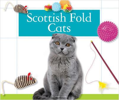 Cover: Scottish Fold Cats