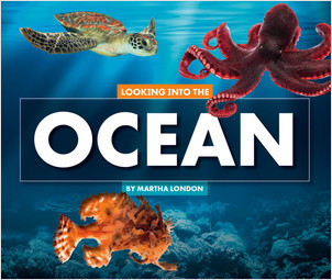 Cover: Looking Into the Ocean