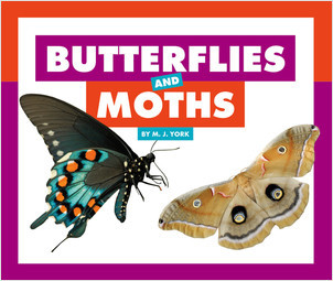 Cover: Butterflies and Moths