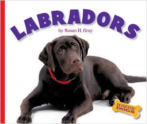 Cover: Labradors