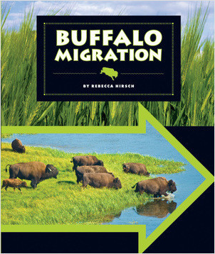 Cover: Buffalo Migration