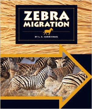 Cover: Zebra Migration