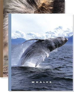 Cover: The World of Mammals