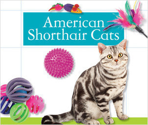 Cover: American Shorthair Cats