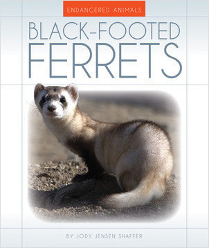 Cover: Black-Footed Ferrets