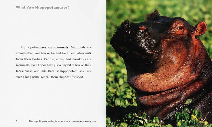 Hippos - The Child's World