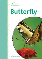 Cover: Butterfly