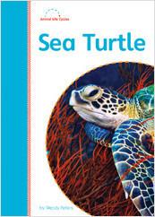 Cover: Sea Turtle