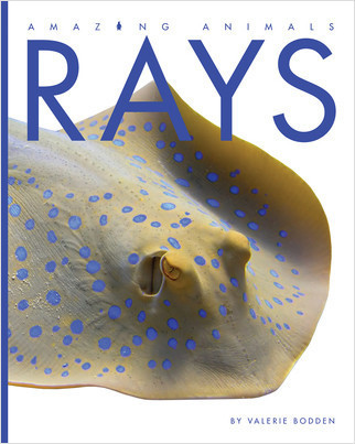 Cover: Rays