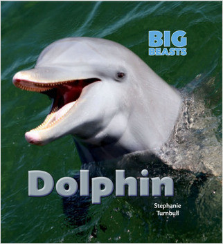 Cover: Dolphin