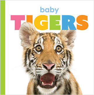 Cover: Starting Out: Baby Tigers