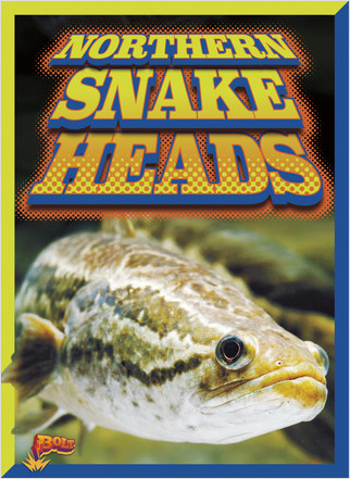 Cover: Northern Snakeheads