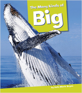 Cover: The Many Kinds of Big