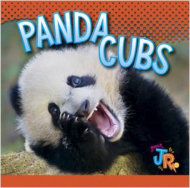 Cover: Panda Cubs