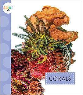 Cover: Spot Ocean Animals