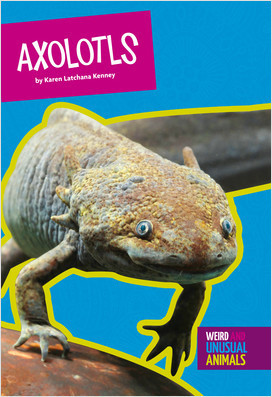 Cover: Weird and Unusual Animals