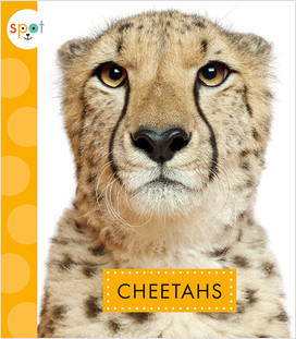 Cover: Spot African Animals