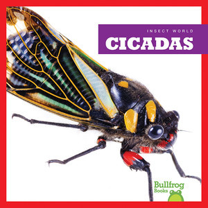 Cover: Cicadas