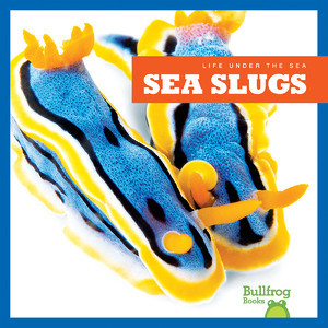 Cover: Sea Slugs