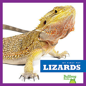 Cover: Lizards