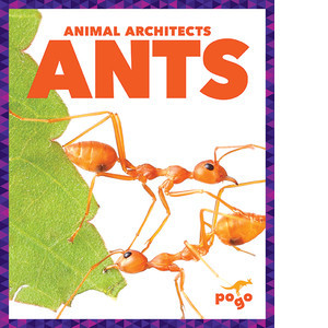 Cover: Ants