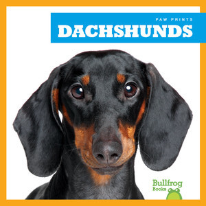 Cover: Dachshunds