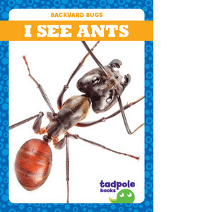 Cover: I See Ants