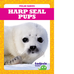 Cover: Harp Seal Pups