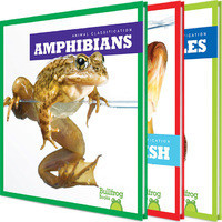 Cover: Animal Classification