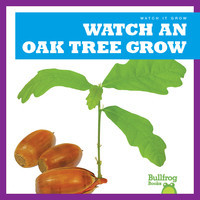 Cover: Watch an Oak Tree Grow