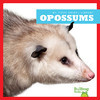 Cover: Opossums